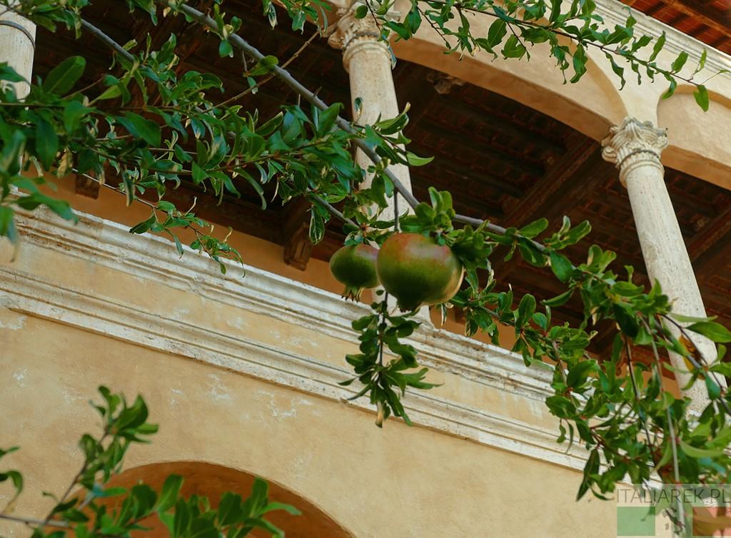 Palazzo Piccolomini - loggia