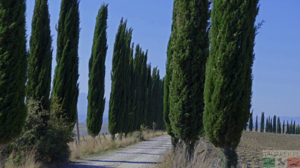 Cyprysowa droga