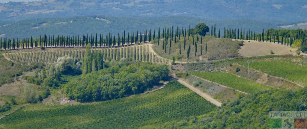 Cyprysy - widok z Montalcino