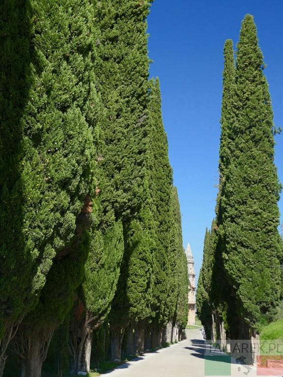 Droga do San Biaggio - cyprysy