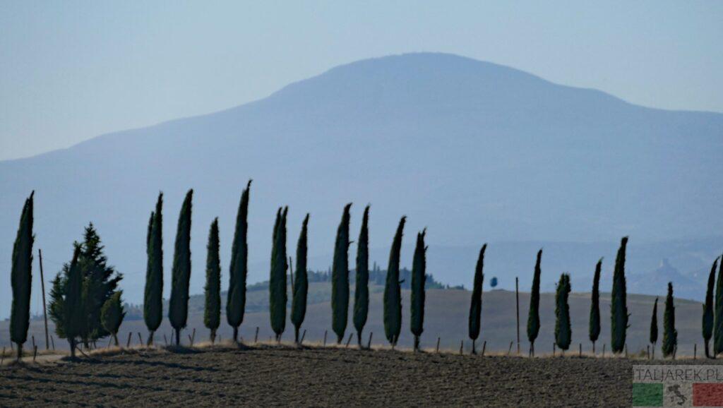 cyprysy na tle Monte Amiata